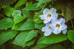 在丰足绿色叶子的三朵绿色花 免版税库存图片