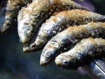 在串的沙丁鱼 免版税库存图片