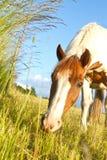 在丹麦和蓝天的马 免版税图库摄影
