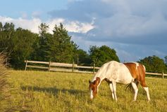 在丹麦和蓝天的马 免版税库存照片