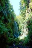 在主要月桂树森林报道的自然保护的Los蒂洛斯岛瀑布在拉帕尔玛岛,加那利群岛,西班牙 库存图片