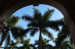 在丽思卡尔顿那不勒斯的棕榈树 库存照片