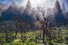 在举的雾的野花 库存照片
