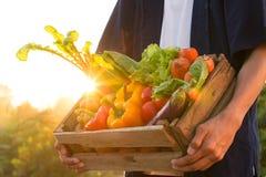 在举行由农夫的木箱子的新鲜蔬菜在美丽的日落,菜园和健康吃概念 免版税图库摄影