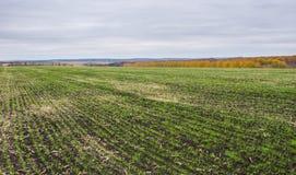 在乌克兰领域的风景 免版税图库摄影