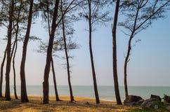 在乌尔拉尔,卡纳塔克邦附近的海滩 免版税库存照片