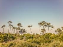 在乌拉圭的海岸的风景 免版税库存照片