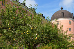 在乌普萨拉城堡塔背景的皇家苹果  免版税库存照片