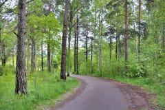 在乌普萨拉瑞典的森林足迹 免版税库存照片