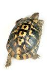 在乌龟之上 免版税库存图片