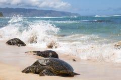 在乌龟海滩的夏威夷海龟在奥阿胡岛,夏威夷 免版税库存图片