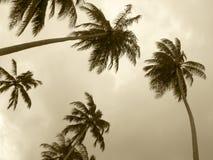 在乌贼属口气的棕榈树 面包渣 库存照片