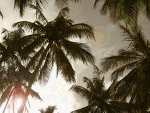 在乌贼属口气的棕榈树 面包渣 免版税库存照片