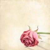 在乐谱用纸的枯萎的玫瑰色花。葡萄酒花卉背景 免版税库存图片