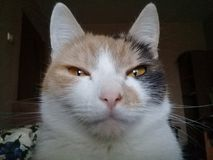 在乐趣和放松的猫索尼娅 库存图片