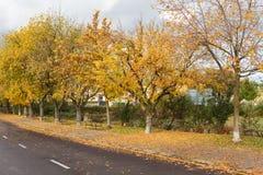 在乘驾的孤立长凳在秋天 免版税库存照片