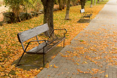 在乘驾的孤立长凳在秋天 图库摄影