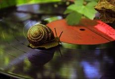 在乙烯基的蜗牛在森林 库存图片