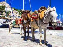 驴在九头蛇海岛,希腊 库存图片