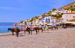 在九头蛇海岛Saronic海湾希腊的驴 免版税库存图片