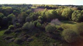 在乡下、更加快速的版本-盘旋一个绿色领域,飞行在森林和发现一个被犁的棕色领域的飞行 股票录像