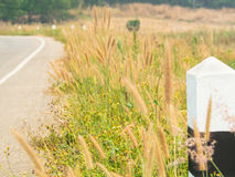 在乡下公路旁边的路标有树和草甸的 免版税图库摄影