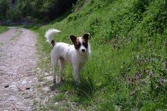 在乡下公路的一条逗人喜爱的狗 库存照片