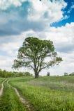 在乡下公路的一棵树 库存照片