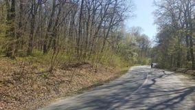 在乡下公路的一辆自行车通过森林 免版税库存图片