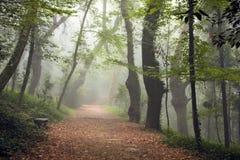 在乡下公路的五颜六色的秋天树 图库摄影