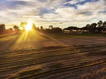 在乡下在培养的领域上和太阳的令人惊讶的日落在树之间传播它的光芒 库存图片