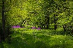 在乡下掩藏的深深紫色花 图库摄影