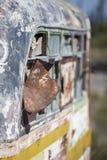 在乡下放弃的生锈的守旧派公共汽车 库存照片