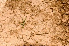 在乡下的天旱 库存照片