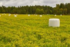 在乡下的被包装的青贮 绿色横向黄色 免版税库存照片
