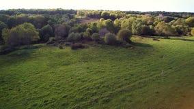 在乡下的飞行,4K序列1 2 -盘旋一个绿色领域对森林的边缘 粗砺的草,灌木,狂放的树 影视素材