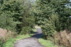 在乡下路的步行通过树 库存图片