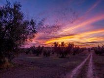在乡下风景的惊人的日落 库存照片