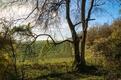 在乡下风景的惊人的秋天日出 免版税库存照片