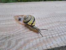 在书桌上的蜗牛 免版税库存照片