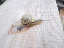在书桌上的蜗牛 图库摄影