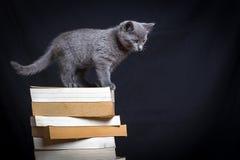 在书的一只灰色小猫 库存照片