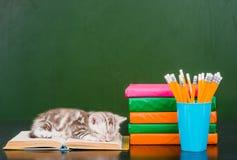 在书的小猫睡眠临近空的绿色黑板 免版税库存照片