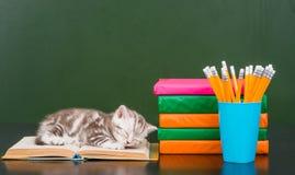 在书的小猫睡眠临近空的绿色黑板 免版税图库摄影