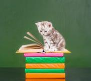 在书的平纹小猫临近空的绿色黑板 文本的样品 库存照片