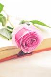 在书的桃红色玫瑰 免版税库存图片