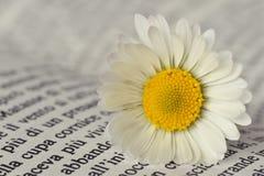 在书的雏菊 免版税库存照片