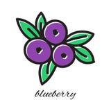 在乱画样式的手拉的蓝莓 向量 库存图片