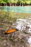 在事假的选择聚焦在热带水池淹没了在Eme 库存照片