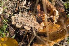 在事假的露水在秋天森林里 库存图片
